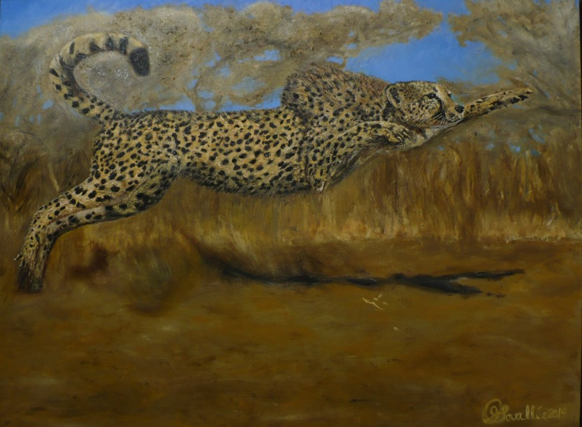 Sauter sur l'occasion guepard