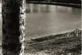 Parc_Lafontaine_1_arbre