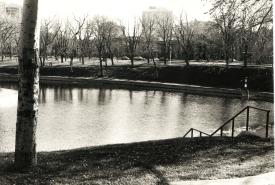 Parc_Lafontaine_2 arbre
